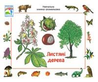Лиственные деревья  Учебная книжка раскраска