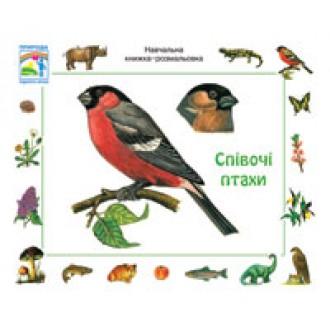 Певчие птицы   Учебная книжка раскраска